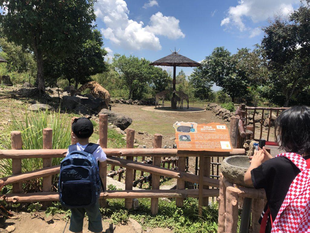 baobab-safari-resort-wildlife
